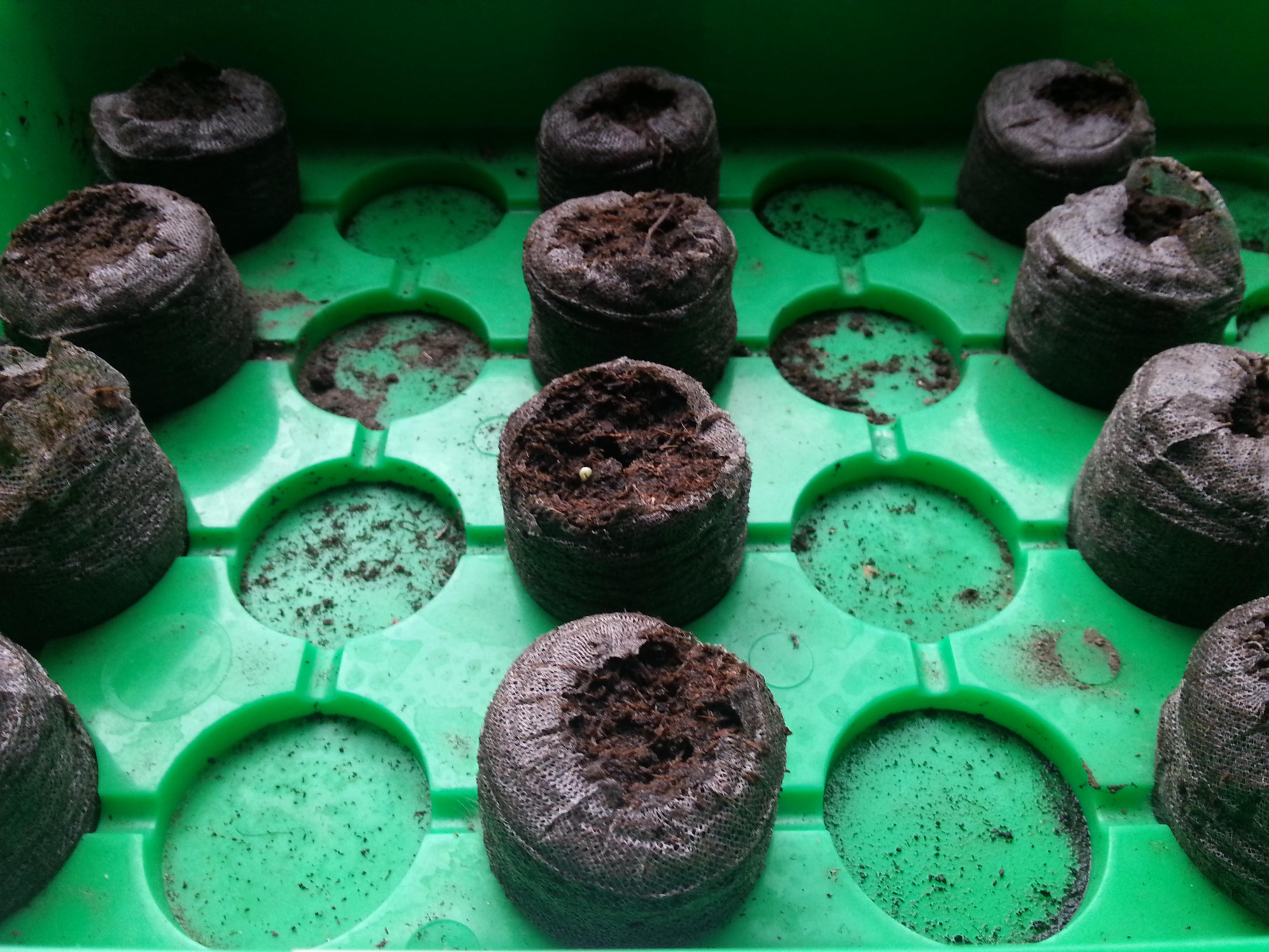 chilipflanzen anbauen und kultivieren kurze anleitung. Black Bedroom Furniture Sets. Home Design Ideas